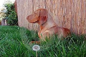 Dog At Shade Stock Photo - Image: 9251900