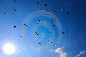 Doves Flying Royalty Free Stock Photography - Image: 9252747