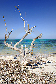 Dead Tree By The Ocean Stock Photos - Image: 9252923
