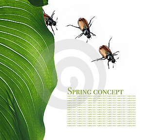 Flora And Beetles Royalty Free Stock Image - Image: 9257546