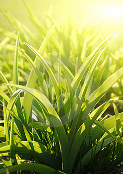 Gardens Grass, Sunny Morning (shallow Dof) Stock Image - Image: 9262941