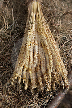 Bunch Of Wheat Ears Royalty Free Stock Image - Image: 9268126