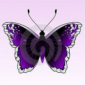 Butterfly Royalty Free Stock Images - Image: 9271979