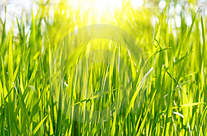 Green Grass Sunset Stock Image - Image: 9275581