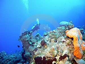 Coral Diver Stock Photography - Image: 9278922