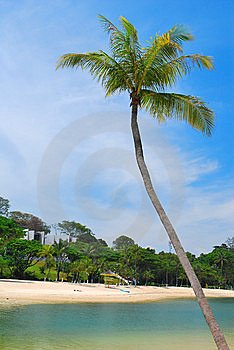 Tropical Coconut Tree Along A Beach Stock Photos - Image: 9282493