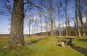 At The Foot Of Oak Stock Photography - Image: 9285712
