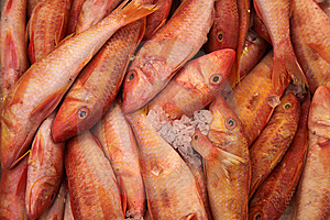 Red Fish On Ice Royalty Free Stock Images - Image: 9289349