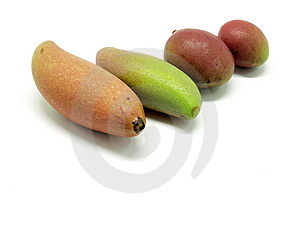 Mango Stock Photo - Image: 9292790