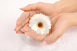 Beautiful Handful Stock Photos - Image: 9294983