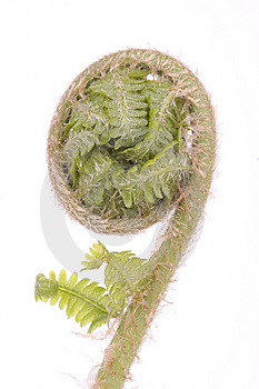 Curled Fern Frond Detail Stock Image - Image: 9297541