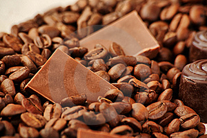 Harvest Of Coffee Stock Images - Image: 9299454