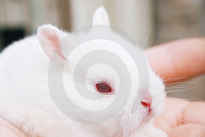 Miniature Rabbits Royalty Free Stock Photography - Image: 937097