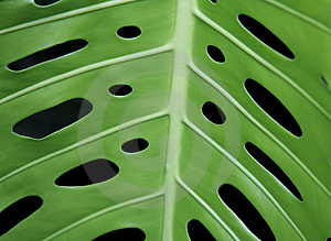 Leaf With Symetrical Holes Stock Photos - Image: 939643