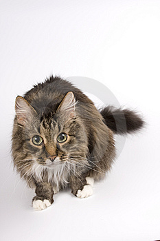 Cat Staring. Who Are You? Stock Photography - Image: 9307662