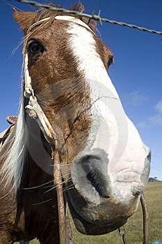 Horse Behind Fence Royalty Free Stock Photography - Image: 9315677