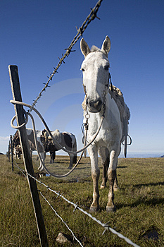 Horse Behind Fence Royalty Free Stock Photography - Image: 9315737
