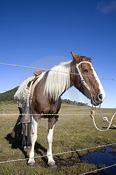 Horse Behind Fence Royalty Free Stock Photos - Image: 9315778