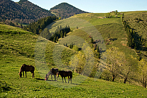 Horses Grazing Stock Photos - Image: 9325433