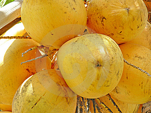 Coconuts Close Up Stock Photos - Image: 9343423