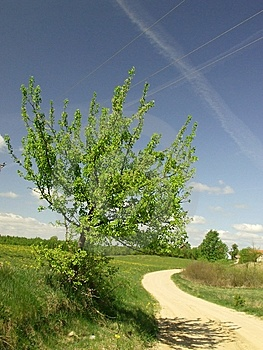 Growing Tree At The Countryside Road Royalty Free Stock Photography - Image: 9346207