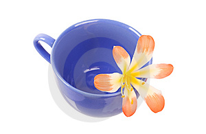 Blue Cap And Flower Stock Images - Image: 9348464
