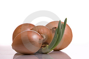 The Sprouted Onions Stock Photography - Image: 9349872