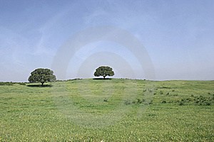 Field Landscape With Two Trees Stock Photo - Image: 9350240