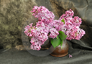 Still-life With A Lilac Royalty Free Stock Photography - Image: 9360577