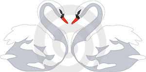 Swan 01 Stock Images - Image: 9364694