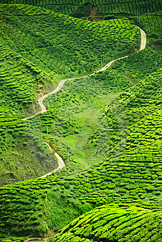 Tea Valley Stock Photos - Image: 9379013