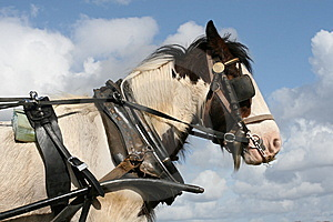 Irish Horse On Duty Royalty Free Stock Photo - Image: 9387155