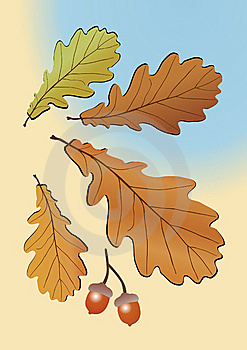 Autumn Oak Leaves Stock Images - Image: 9391544
