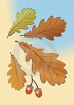 Autumn Oak Leaves Stock Images - Image: 9391544