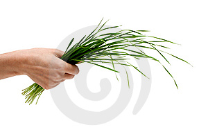 Bunch Of The Green Herb Stock Images - Image: 9392484