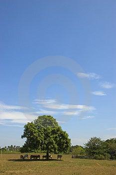 Коровы в тени Стоковое фото RF - изображение: 948035
