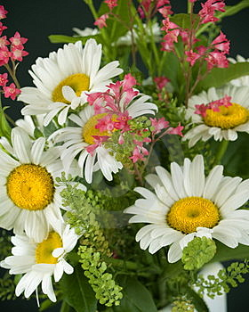 Bouquet Of Daisies Free Stock Photos