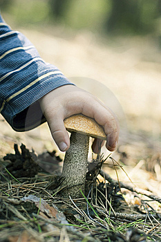 Mushroom Is In A Hand Royalty Free Stock Photo - Image: 9418645