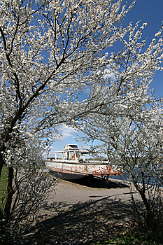 Blossoming Tree And Old Motorboat Stock Photography - Image: 9426302