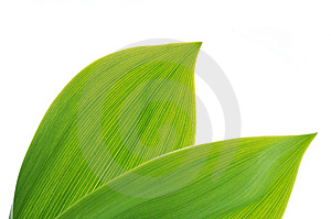 Green Leaves Royalty Free Stock Image - Image: 9432976