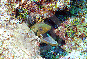 Moray Eel Stock Photo - Image: 9435330