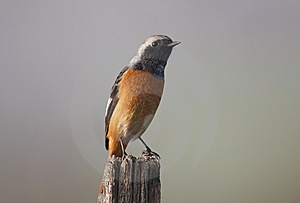 Wild Bird On Branch Stock Images - Image: 9438774