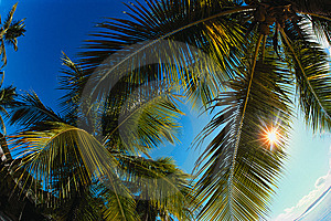 Vacation Is In Tropics Royalty Free Stock Photography - Image: 9439367