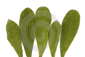 Leaf Royalty Free Stock Photo - Image: 9442025