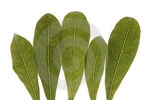 листья Стоковое фото RF - изображение: 9442025