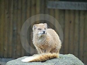 Mammal At Zoo Stock Photos - Image: 9449193