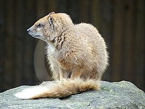Mammal At Zoo Royalty Free Stock Photos - Image: 9449218