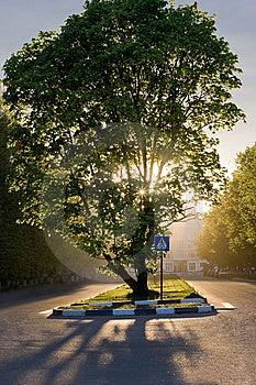 Árvore Maravilhosa Com Por Do Sol Fotografia de Stock Royalty Free - Imagem: 9463977