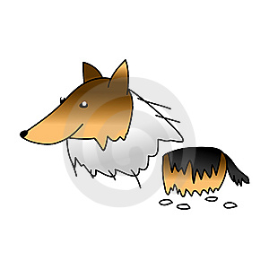Collie Dog Stock Photos - Image: 9465353