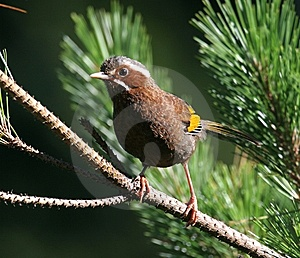 Wild Bird On Branch Stock Photos - Image: 9471743
